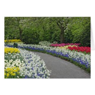 Voie de trottoir par des tulipes et des jonquilles carte de vœux
