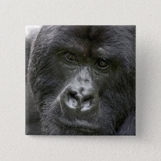 Volcanoes NP, Rwanda, Mountain Gorillas, 2 Inch Square Button