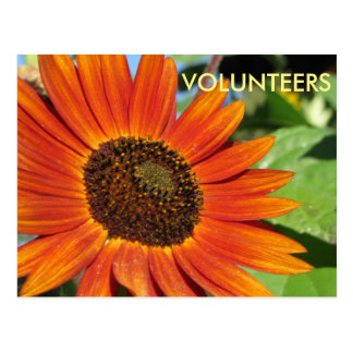 Volunteer Postcard with Sunflower