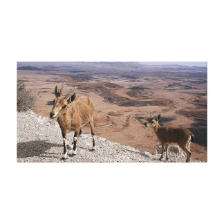 Vue de paysage de cratère de Ramon de chèvres de Impression Sur Toile
