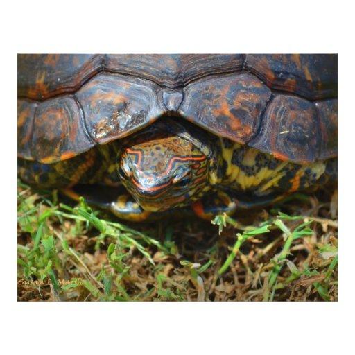 Vue supérieure saturated.jpg de tortue fleurie prospectus