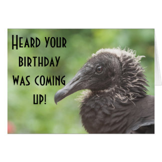Vulture Happy Birthday Card