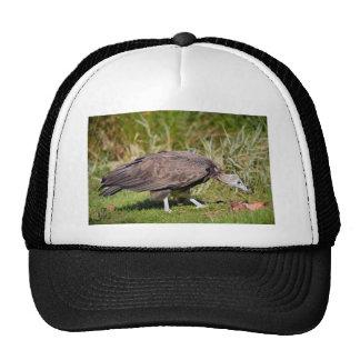 Vulture on grass trucker hat