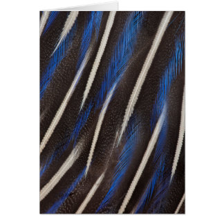 Vulturine Guineafowl feather Card