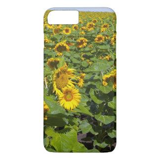 WA, Kittitas County, Sunflower Field iPhone 7 Plus Case