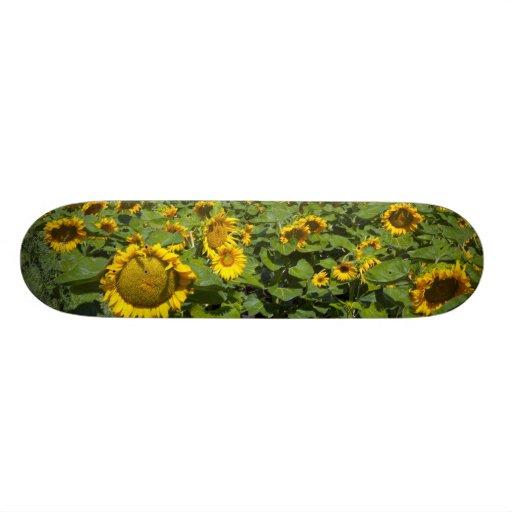 WA, Kittitas County, Sunflower Field Skateboard Decks