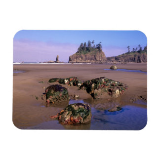 WA, Olympic NP, Second Beach with tidepools and Rectangular Photo Magnet