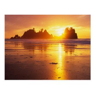WA, Olympic NP, Shi Shi beach at sunset, Point Postcard
