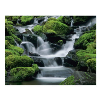 WA, Olympic NP, Sol Duc Valley, stream with Postcard