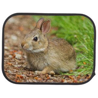 WA, Redmond, Eastern Cottontail baby rabbit Floor Mat