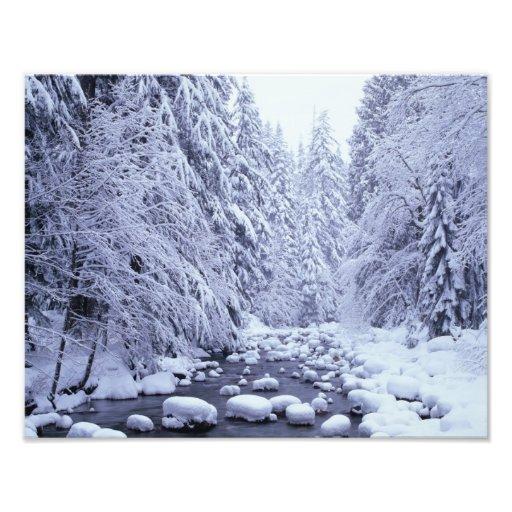 WA, réserve forestière de Boulanger-Snoqualmie de  Tirage Photo