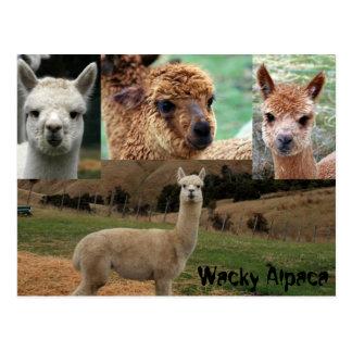 Wacky Alpaca Postcard