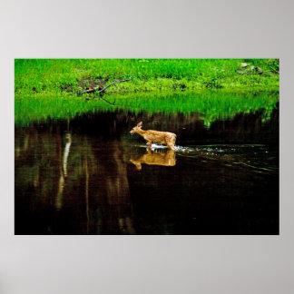 wading deer poster