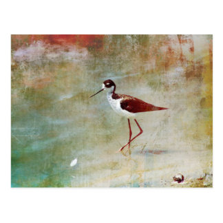 Wading Stilt Postcard