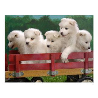 Wagon Full of Cute Puppies Postcard