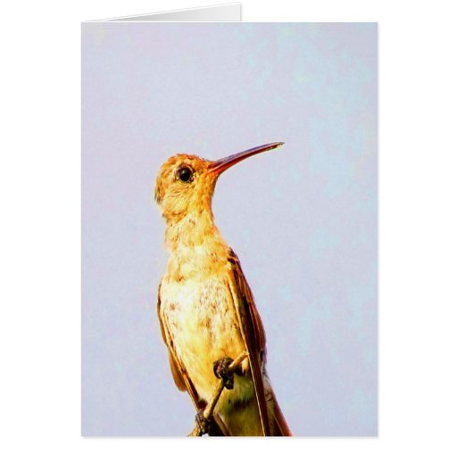 Wait for love and joy buffy hummingbird twig cards