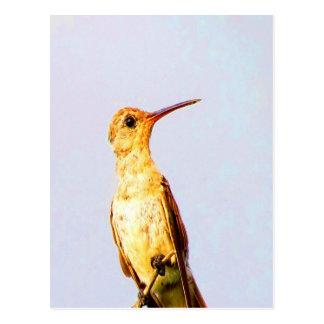 Wait for love and joy buffy hummingbird twig postcard