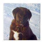 Waiting for mom love black white labrador puppy ceramic tile
