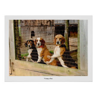 'Waiting to Run'  Beagle Print