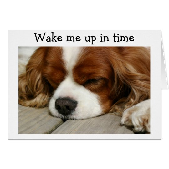 """""""WAKE ME UP IN TIME"""" SAY SPANIEL BIRTHDAY GREETING CARD"""