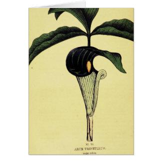 Wake Robin Plant Card