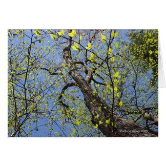 Walden Pond: Louisa May Alcott Card