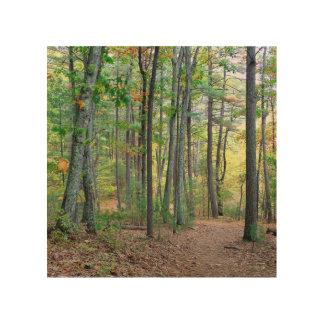 Walden Pond: On Wood Wood Wall Art