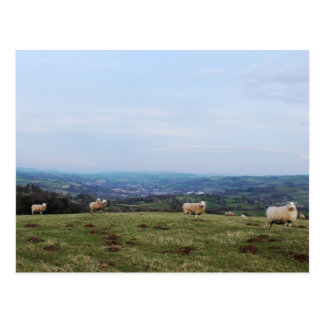 Wales Hill View Landscape Sheep and Welsh Horizon Postcard