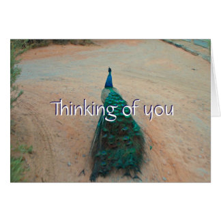 Walk Away Peacock - Thinking of You Card