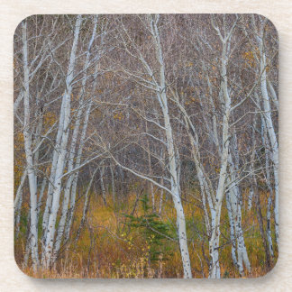 Walk In The Woods Coaster