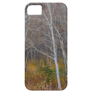 Walk In The Woods iPhone 5 Case