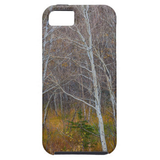 Walk In The Woods iPhone 5 Cover
