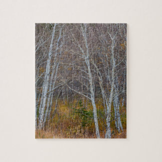 Walk In The Woods Jigsaw Puzzle