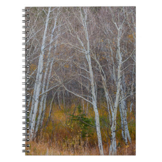 Walk In The Woods Notebooks