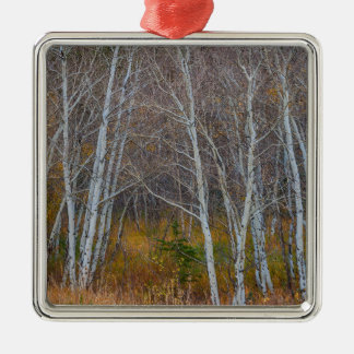 Walk In The Woods Silver-Colored Square Ornament
