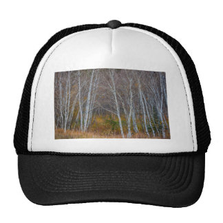 Walk In The Woods Trucker Hat