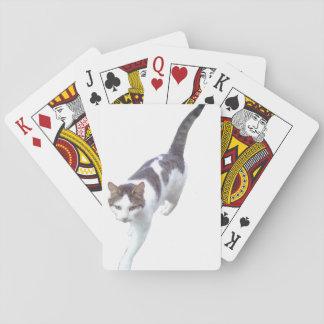 Walking cat playing cards