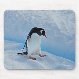 Walking Gentoo Penguin Mouse Pad