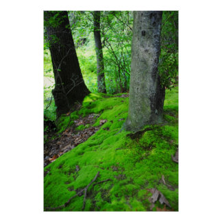 Walking in the Nimisilla  woods with trees Poster