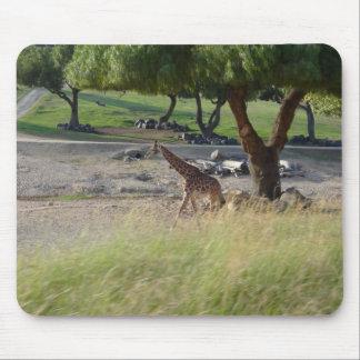 Walking Safari Giraffe Field Nature Mouse Pad