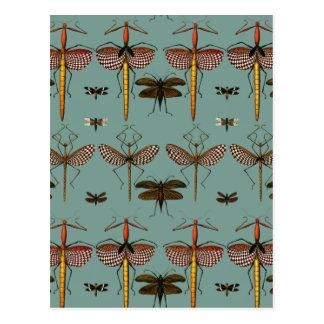 Walking sticks, Katydids and Dragonflies Postcard