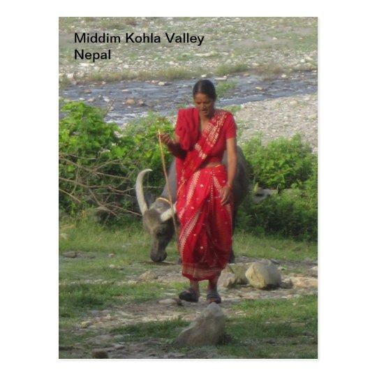 Walking the Water Buffalo Postcard