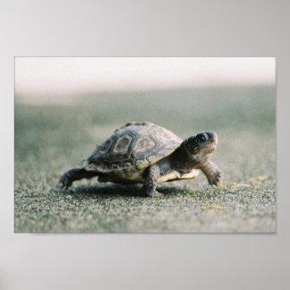 Walking Turtle Poster