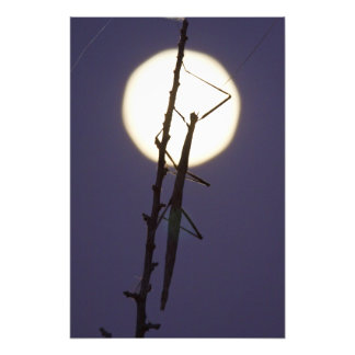 walkingstick and full moon in south Texas, USA Photo Print