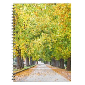 Walkway full of trees notebooks