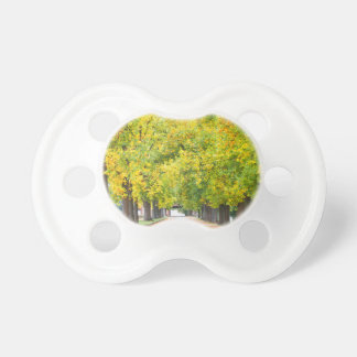 Walkway full of trees pacifier