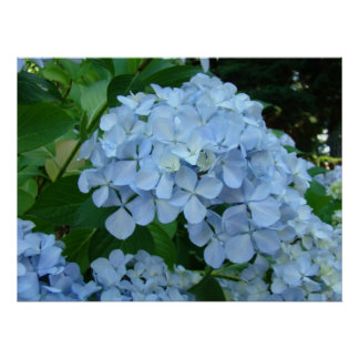 WALL ART Floral Hydrangea Flowers Baslee Troutman Poster