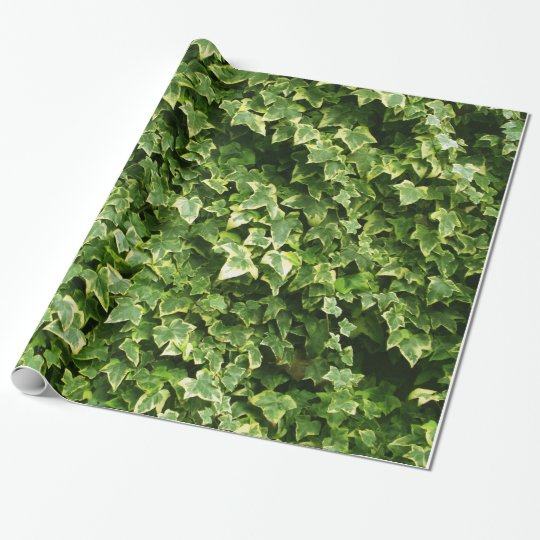 Wall of Ivy Leaves