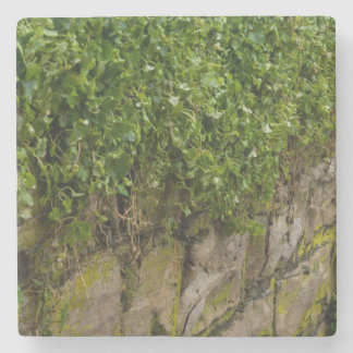 Wall Of Ivy Stone Coaster