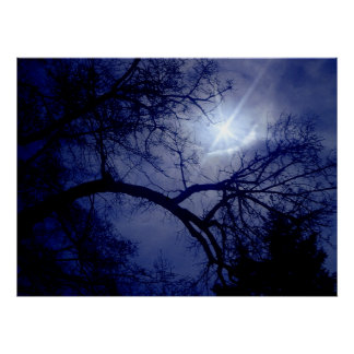 Wall Size Tree Silhouette Poster